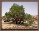 Atlantic Pistachia, Negev desert.