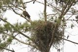 Eagle and Nest.jpg