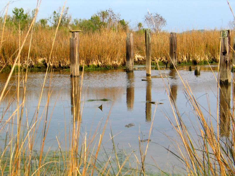Old Camp Pilings
