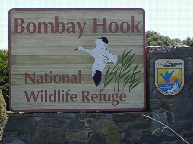 Bombay Hook NWR