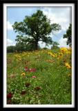 Wildflower Tree