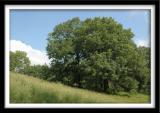 Prairie and Oak