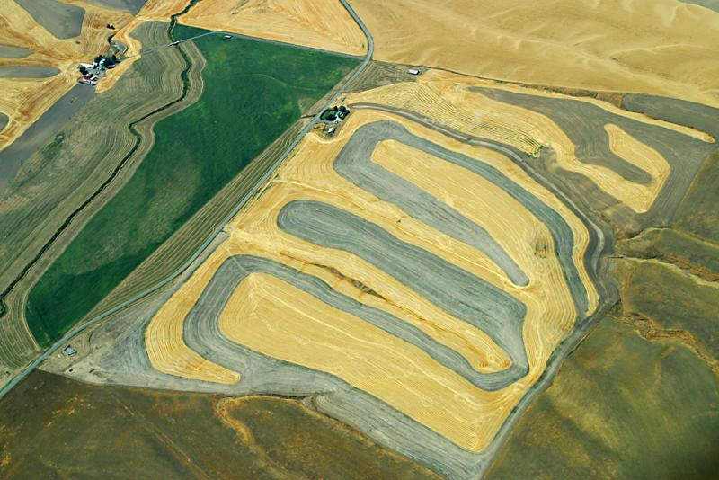 Wheat fields, Idaho