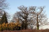 Winter, Cheshire