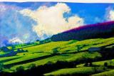North Yorkshire fields