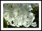 Lillies net.jpg