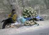 Coconut for sale.jpg