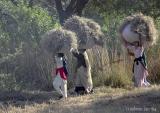 Grass cutters.JPG