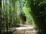 Bamboo Trails