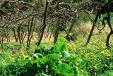Vigne et jardin