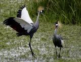 Herons, storks, flamingos, etc