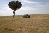 Mel finds the only shade in this area of the Masai Mara under a candelabra tree