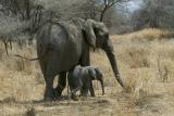 Mom and smaller calf