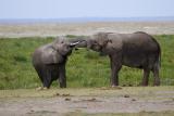 Elephant bros at the waterhole