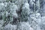 Pamukkale stream
