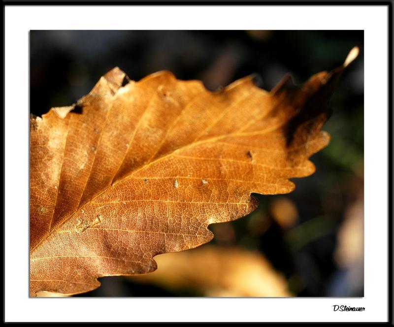 ds20050115_0126awF Leaf.jpg