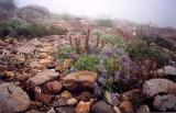 Rocks and Wildflowers (Scanned Print)