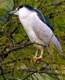 IMG_7107 birds.jpg