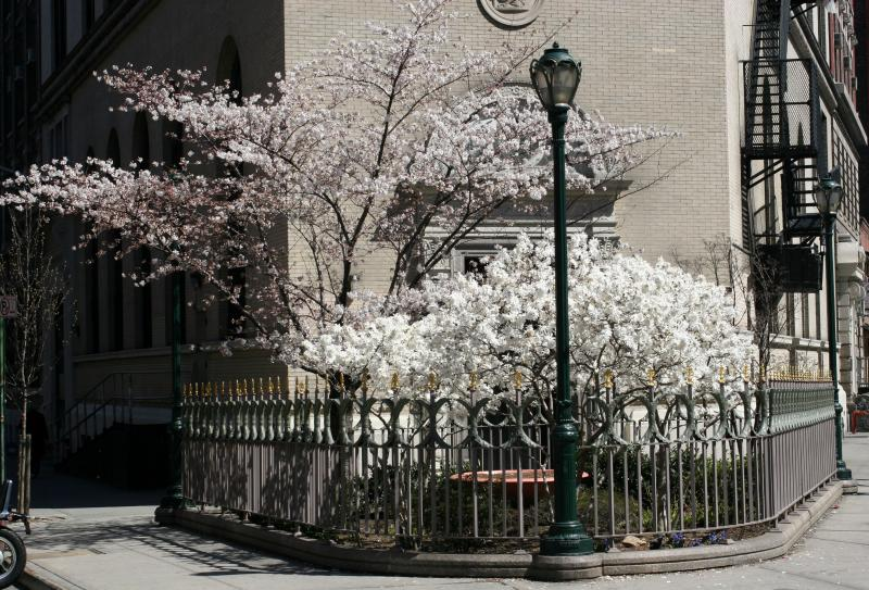 Garden at E 9th Street near 3rd Avenue