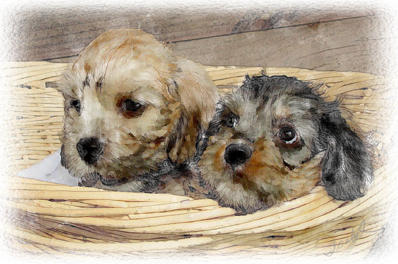 2 Dandie Pups Painting
