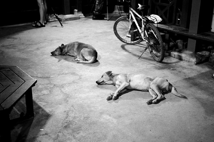 Dogs at Pulau Ubin Jetty