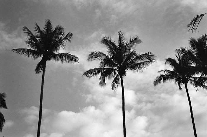 Coconut Plantation II