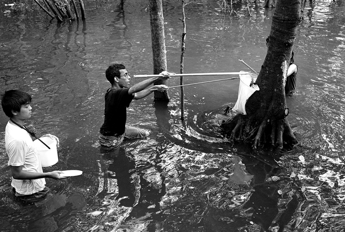 Field Researchers Collecting Specimens IV