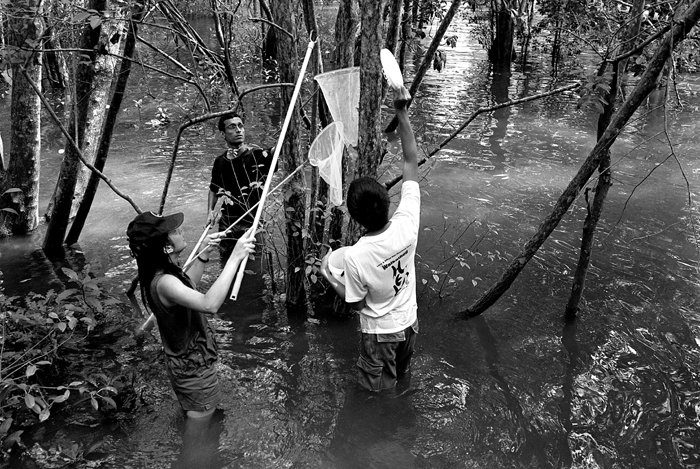 Field Researchers Collecting Specimens V