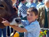 Herisau Cattle Show 2002
