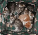 Resting in their birth house - pennut loikoilemassa synnytyspesässään.