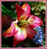 Floral Engagement Reveals Mysterious Enchantment