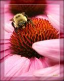 A Bee Invades the Garden