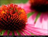 Floral Arrays and Rhythms