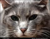 1670-stock-cat-image.jpg