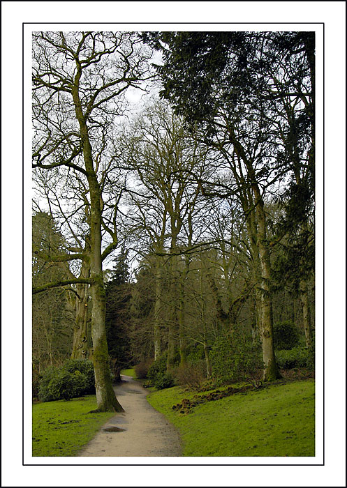 Tree lined path ~ Stourhead