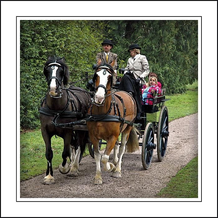 Horse and carriage, Arlington Court, North Devon