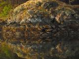 Intertidal reflection