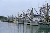 Fishing Fleet at Cordova