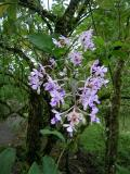 orchids growing wild in the rainforest