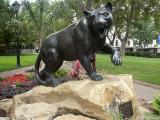 The Pitt Panther