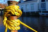 Yellow knots