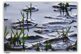 Netanya puddle park - New life