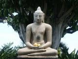 Buddha under a Banyan