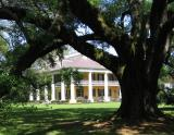 Houmas House with large live oak