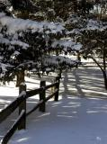 Fence line in winter