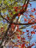 AHHHH....Autumn in New England - I Love It