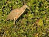 Birds -- Mexico