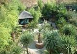 Paul Rose's Brum garden (UK)