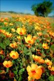 Flowers in AZ