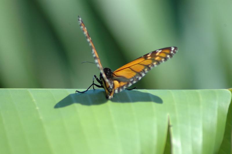 butterfly45